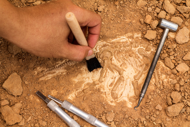 brushing dirt off an archeological find.